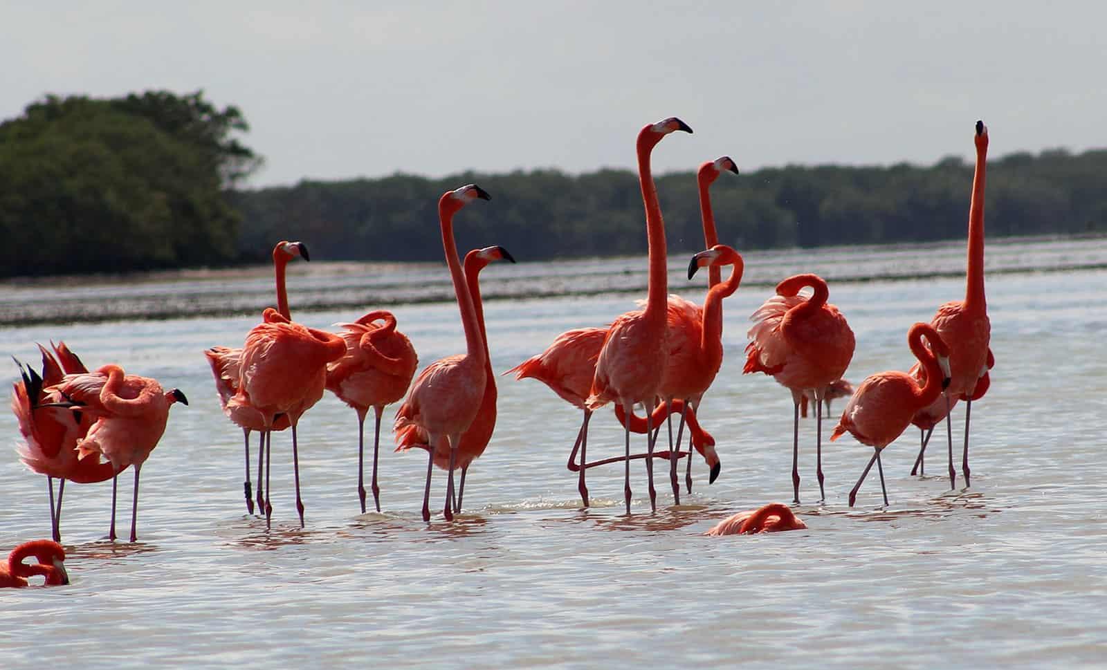 flamingos tour