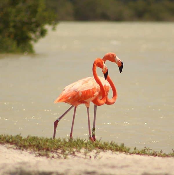 Yucatan-Discovery-Tour